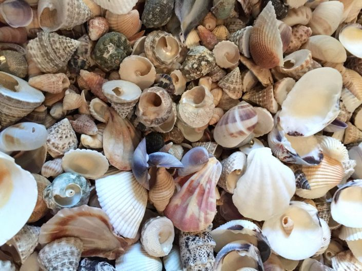 In Need of Vitamine Sea MosaicAffairs schelpen kunst shell art